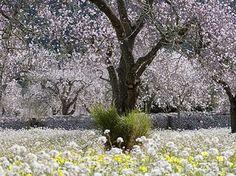https://www.google.com.au/search?q=almond grove