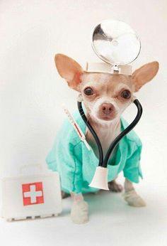 Chihuahua. Lol cute