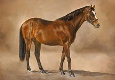 Mtoto, who won the Eclipse St. in 1987 and 1988. I was lucky enough to visit him at stud when we lived near Newbury in 2001/2. A brilliant racehorse who's son Presenting, placed second in the Derby, has developed into a major NH sire. #mtoto #oilpainting #equineart #racingart #sportingart #thoroughbred #flatracing #sandownpark #eclipsestakes #lisamillerart