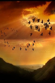 There's never one sunrise the same or one sunset the same. Beautiful Sunset, Beautiful Birds, Beautiful World, Beautiful Images, Image Nature, All Nature, Amazing Nature, Nature Pictures, Cool Pictures
