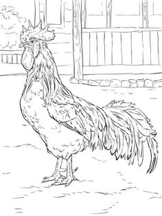 free chicken hen rooster coloring pages pictures brown leghorn rooster coloring page free printable coloring free pictures hen rooster pages chicken Fox Coloring Page, Animal Coloring Pages, Colouring Pages, Printable Coloring Pages, Adult Coloring Pages, Coloring Books, Coloring Sheets, Rooster Painting, Rooster Art
