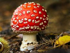 Autumn Jewel by Geoff Carpenter. Posted on Redbubble.