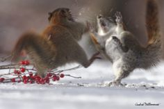 Boxing day by Andre Villeneuve on 500px