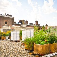 if i ever live in the city i need a rooftop garden