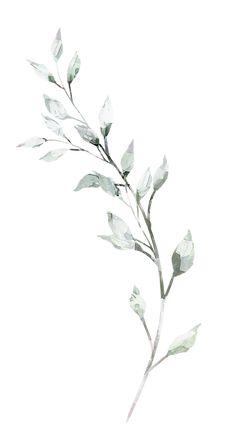 Botanical Drawings, Botanical Illustration, Illustration Art, Deco Floral, Floral Prints, Art Prints, Metal Clock, Metal Wall Art, Aesthetic Iphone Wallpaper