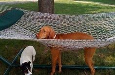 See? | There's A Facebook Page About Animals Getting Stuck In Objects And It's Gold