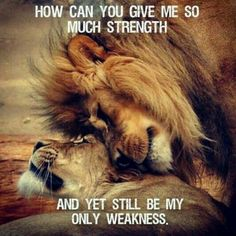 lion and lioness love quotes I Love You Quotes, Love Yourself Quotes, Lion Quotes, Anger Quotes, Quotes Quotes, Lion And Lioness, Lion Love, Motivational Quotes, Inspirational Quotes