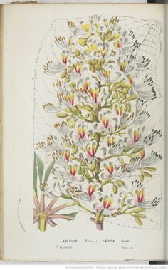 Flore des serres et des jardins de l'Europe, M. Ch. Lemaire,... M. Scheidweiler,... M. L. Van Houtte,... | 1858