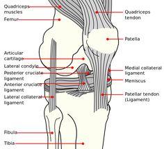 Knee diagram - Ρήξη προσθίου χιαστού συνδέσμου - Βικιπαίδεια