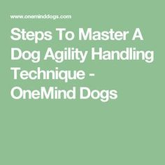 Steps To Master A Dog Agility Handling Technique - OneMind Dogs
