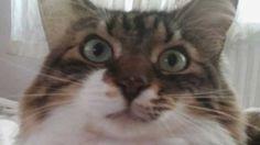 İki insanı birden idare eden kedi kameralara yakalandı :) Detaylar ajanimo.com'da.. #ajanimo #ajanbrian #hayvan #animal #cat #kedi