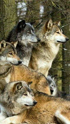 """This is my pack. My family. We watch out for each other. Because that's what families do. And when times are tough & life is cold, we stand together, for we are stronger that way."""