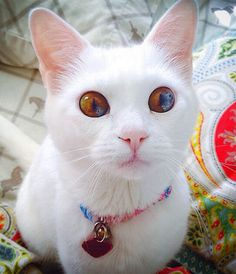 A pretty cat named Jumper has different colored eyes, a condition called sectoral heterochromia.