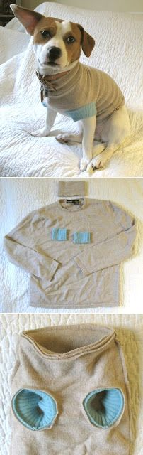 4 DIY Dog Sweater And Coat Patterns