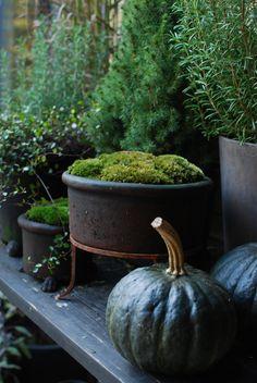 Autumn Decorating, Pumpkin Decorating, Small Balcony Design, Love Garden, Black Garden, Garden Of Earthly Delights, Italian Garden, Garden Planters, Garden Inspiration