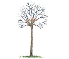Kugelbaum schneiden