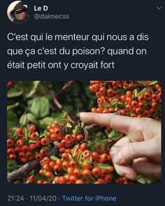 Funny Memes Images, Funny Pictures, Photo Post Bad, Image Citation, How To Speak French, Funny Messages, Lol, Humor, Inspiration