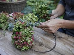 Deko DIY Source by No related posts. Deco Floral, Arte Floral, Garden Care, Autumn Wreaths, Christmas Wreaths, Hydrangea Garden, Hydrangea Wreath, Autumn Garden, Fall Flowers