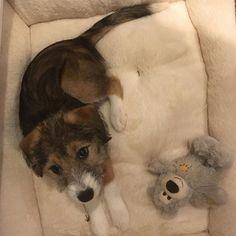 New Arrival #dog #dogsofinstagram O Reilly, Corgi, Animals, Instagram, Corgis, Animales, Animaux, Animal, Animais