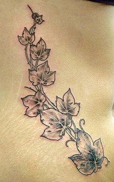 Ivy Because it is evergreen, ivy represents faithfulness and eternal life.-sleeve
