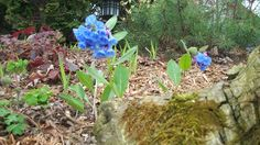 Tips on growing Native Woodland Plants and Ephemerals from Seed #gardening #nativeplants