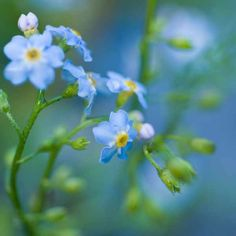 Native plants for wildlife ponds