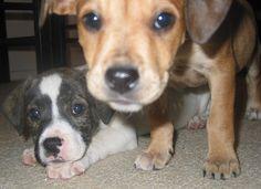 Puppies   Best Dog Insurance! http://www.offers.couponrainbow.com/embrace-pet-insurance/
