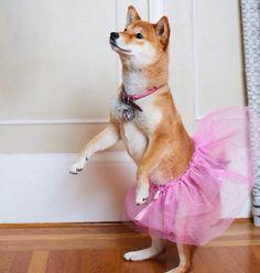 Ballerina Kitsu!