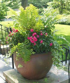 5 Smooth Tips: Garden Ideas Wall Trellis urban backyard garden design.Backyard Garden Design How To Grow. Outdoor Flowers, Outdoor Planters, Garden Planters, Outdoor Gardens, Fern Planters, Garden Trees, Container Flowers, Container Plants, Container Gardening