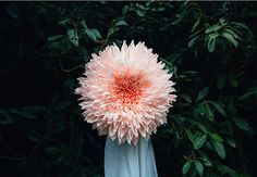 Huge paper dahlia flower created by Tiffanie Turner. of papel sf. Photo by Portraits To The People. Found on sfgirlbybay.