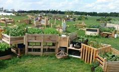 Urban gardening takes off at Berlin's fabled airport Tempelhof - The Local