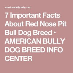 7 Important Facts About Red Nose Pit Bull Dog Breed • AMERICAN BULLY DOG BREED INFO CENTER