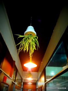 Sky Pots : Take your plants to the ceiling with XOG's Sky Pots.   Inverted pots hung from the ceiling comes with a choice of indoor or out door plants.  www.xog.co.in