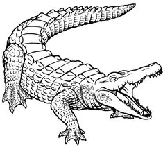 Free Printable Alligator Coloring Pages For Kids | Pinterest ...