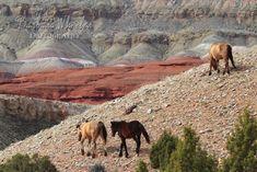 Wild Horses of Montana, Pryor Mountain by Barbara Wheeler