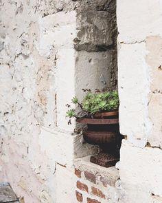 I love this window!!! . . . . . #nabateaconceptstore #windowsoftheworld #windowsofinstagram #windowsill #windows #details #detailshot #detailsoftheday #flowers #flowerstagram #whitewash #brickwall #countryhouses #countryhousestyle #thesecretgardenretreat #plantsoftheday #plantsofinstagram