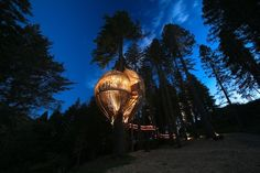 yellow treehouse - pacific environments architects