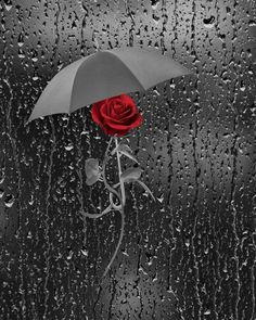Splash Photography, Rain Photography, Flowers Wallpaper, Black And Red Roses, Black White, Sunflower Pictures, Red Wall Art, Umbrella Art, Dark Art Drawings