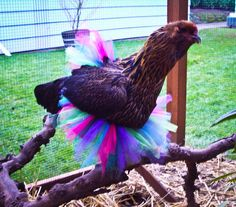 Fashion Fowl: Awesome Fashion Finds for Your Pet Chickens, Ducks ...