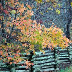 The South's Best Fall Color | Natchez Trace Parkway, TN | SouthernLiving.com~ Natchez Trace Parkway connects the cities of Nashville, Tennessee and Natchez, Mississippi.