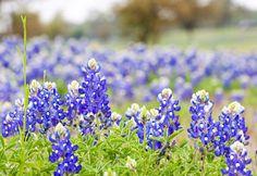 Rewilding Your Home Landscape