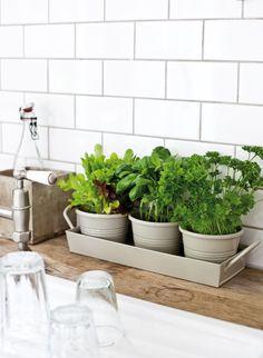 kitchen herb pots | white subway tile