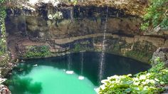 #valladolid #cenote #wild #picture #holliday