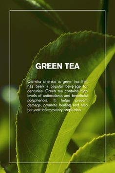 Our next ingredient feature in Svelta Tan Self-Tanner is green tea! #svelta #sveltatan #ingredients #nature #natural #tea #greentea #beauty #skincare #selftanner #tanning #tan #bronze