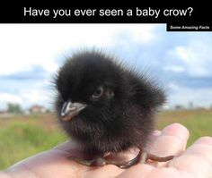 BABY CROW!!!!!!