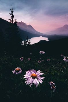 Flowers on the mountains aesthetic wallpaper aesthetic wallpaper dark backgrounds iphone aesthetic b Aesthetic Backgrounds, Aesthetic Iphone Wallpaper, Dark Backgrounds, Phone Backgrounds, Wallpaper Backgrounds, Aesthetic Wallpapers, View Wallpaper, Landscape Photography, Nature Photography