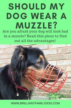 Should my dog wear a muzzle? I'm worried that people will think my dog is aggressive and I'm a bad dog-owner! Find out here how to teach your dog to love wearing a muzzle Dog Training Books, Training Your Dog, Training Tips, Training Equipment, Reactive Dog, Dog Muzzle, Dog Information, Aggressive Dog, Dog Care Tips