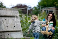 Young girl pulling up onions on an allotment royalty-free stock photo