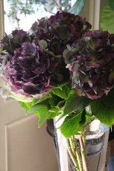 hydrangea Elbtal classic violet  ᘡℓvᘠ❉ღϠ₡ღ✻↞❁✦彡●⊱❊⊰✦❁ ڿڰۣ❁ ℓα-ℓα-ℓα вσηηє νιє ♡༺✿༻♡·✳︎· ❀‿ ❀ ·✳︎· SUN OCT 30, 2016 ✨ gυяυ ✤ॐ ✧⚜✧ ❦♥⭐♢∘❃♦♡❊ нανє α ηι¢є ∂αу ❊ღ༺✿༻✨♥♫ ~*~ ♪ ♥✫❁✦⊱❊⊰●彡✦❁↠ ஜℓvஜ