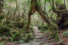 Wandern im Shiratani Unsuikyo, Yakushima, Japan
